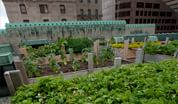 Fairmont Royal York rooftop garden